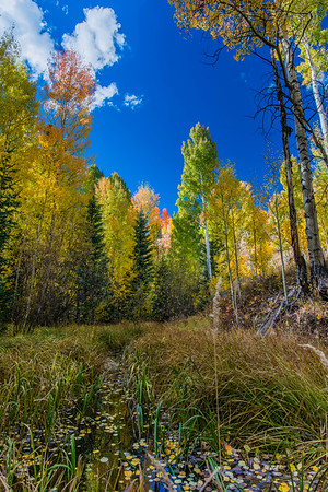 10-1-16 Meadow Creek Colors