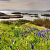 Springtime, Beach Drive, Victoria