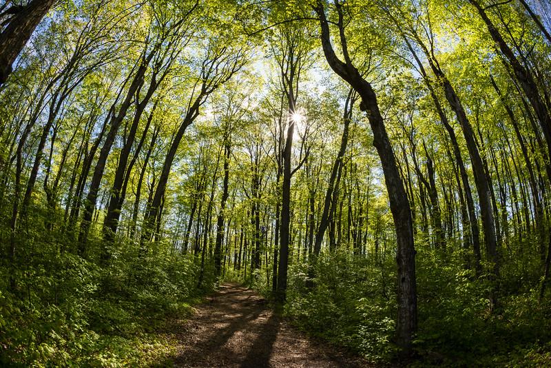McIreland Trail