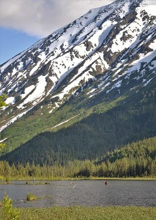 Tern Lake Moose