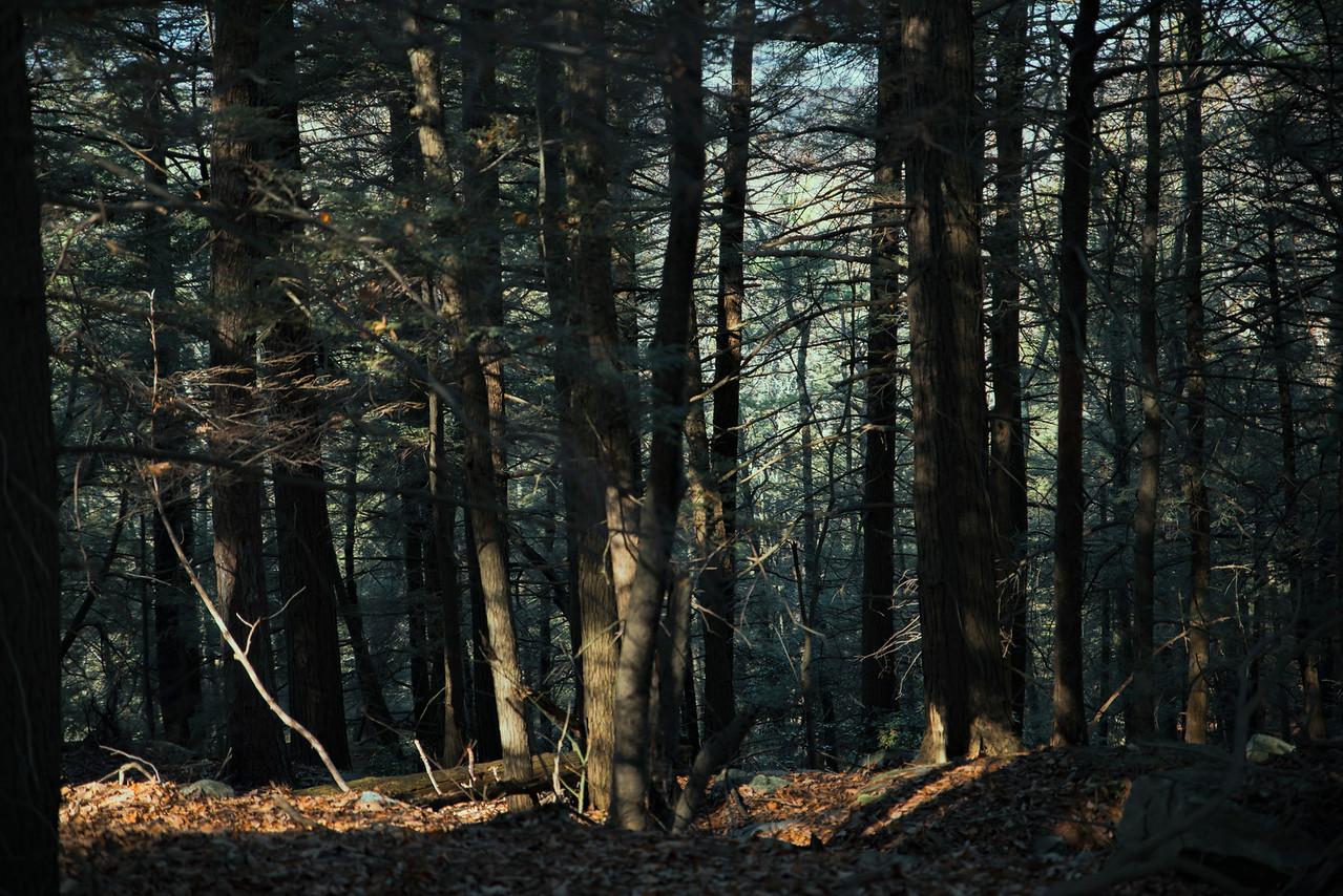 Forest Light by Beata Obrzut