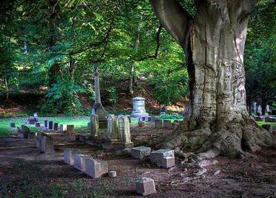 Mount Hope Cemetery - Tree