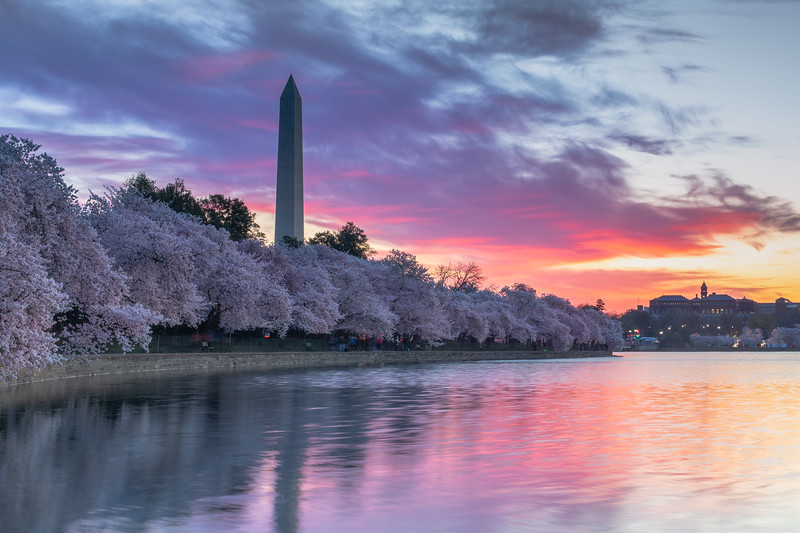 A Cherry Blossom Sunrise