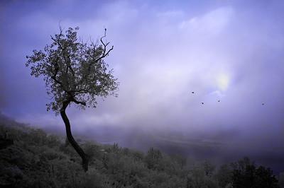 infrared fog_2539