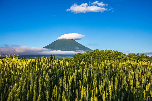 Summer Green, Mt. Yotei, Hokkaido, Japan