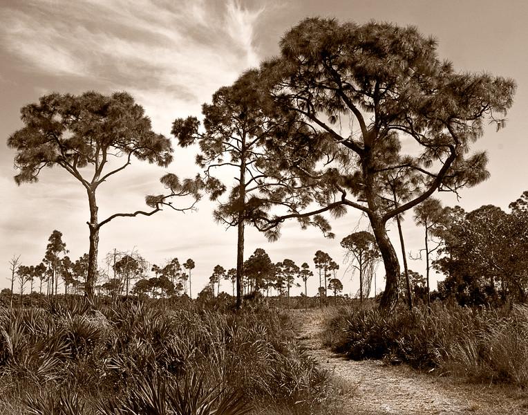 Pine Island Path