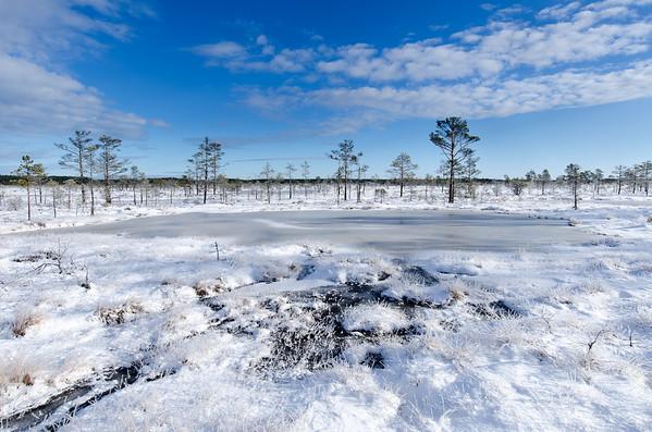 Winter in Kõnnu Suursoo