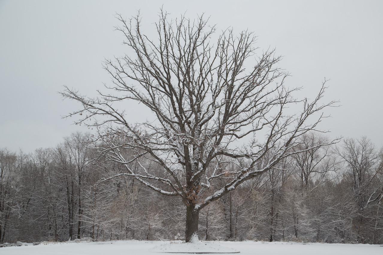 #snow #day