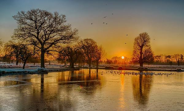 Bushy Park - Heron Pond