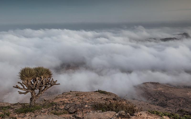 Oman - Salalah