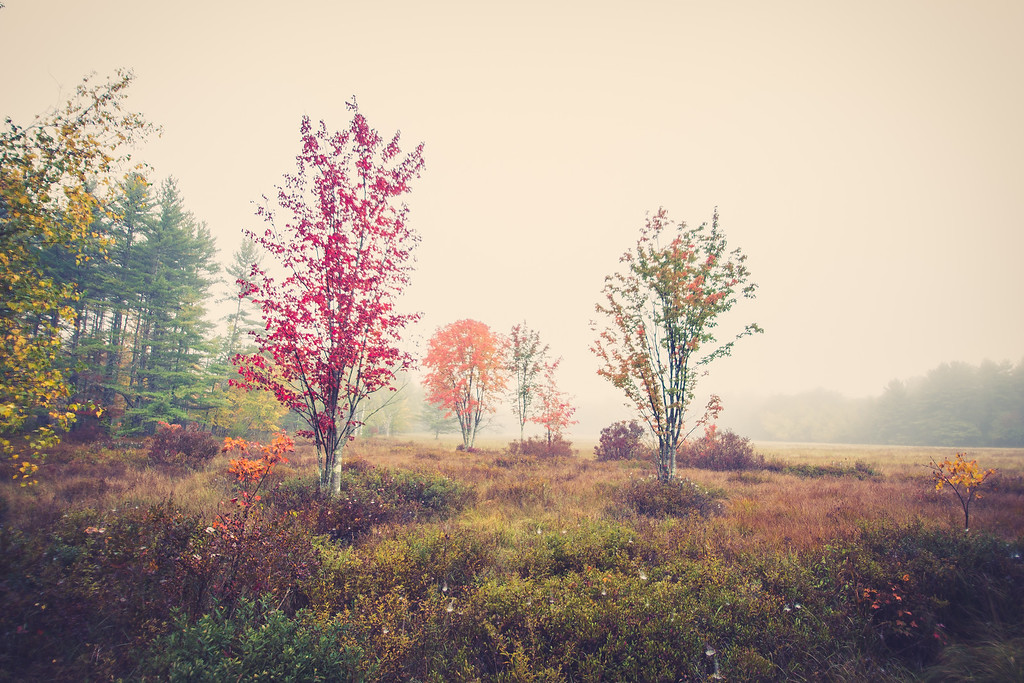 Foggy Fall Day