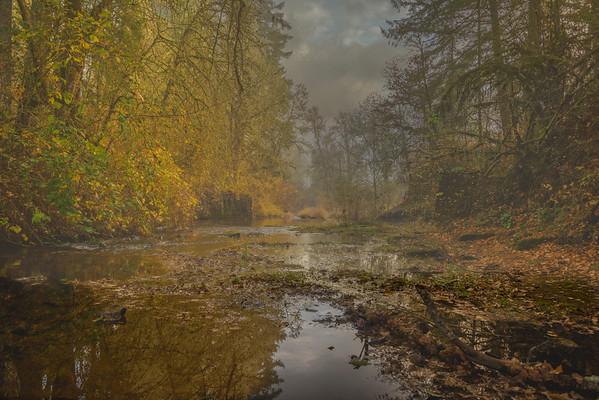 misty Alsea River