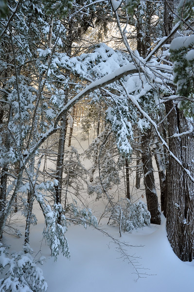 Sun Peeking Through Snowy Forest - Nova Scotia