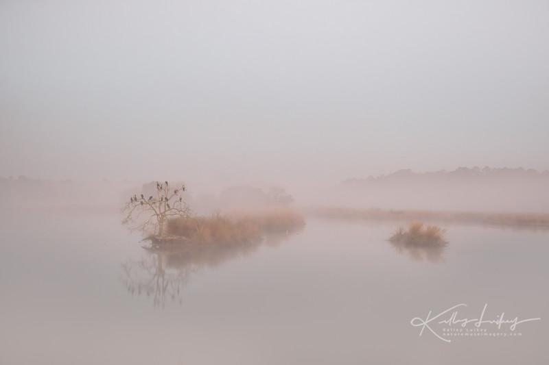 February Fog
