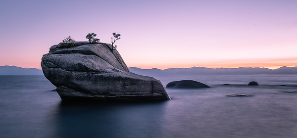 The Bonsai Rock