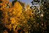 Autumn in the La Plata Mountains