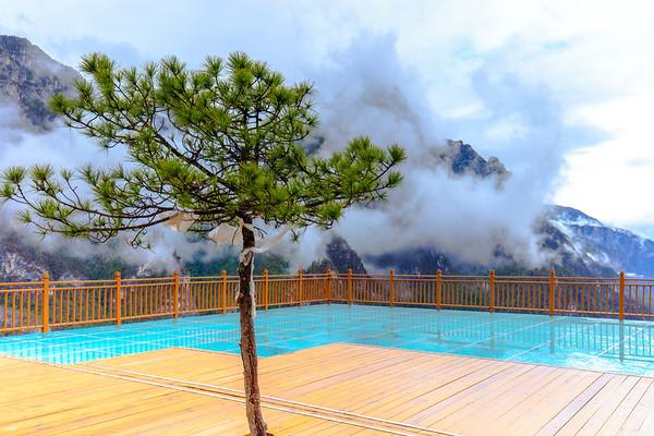 A Green Pine Tree, 3000meters Balagezong Grand Canyon National Park Shangri-La, Yunnan, China