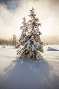 Snowy giant