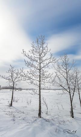 Tree Frost