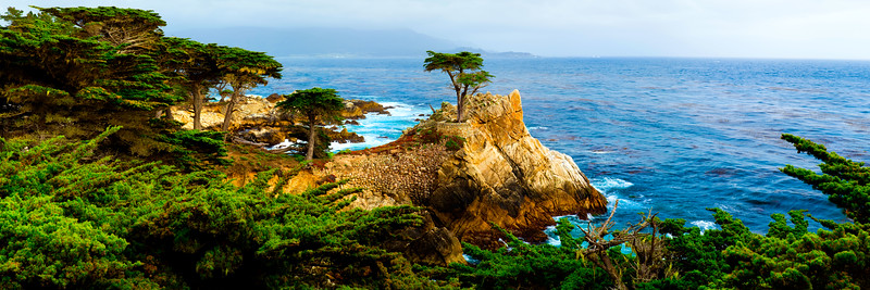 Sentinel of Pebble Beach