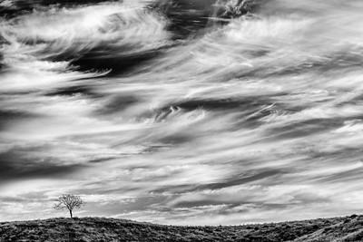 Landscapes-354