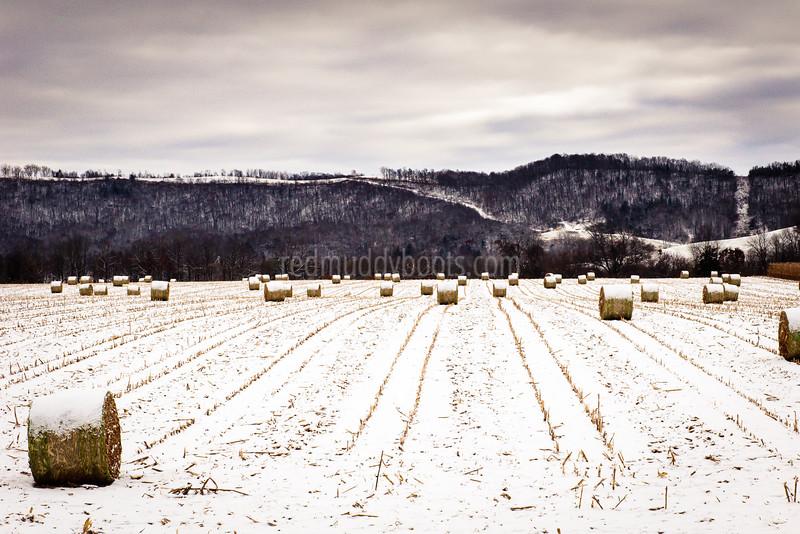 Winter Rolls