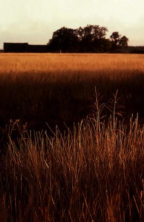 LA Series. Grass Field Sunset