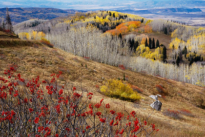 Fall on Steamboat's Buffalo Pass Limited Edition by Kat Walsh Photography