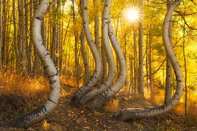 BendyTrees_NikonD850_Nikon2470