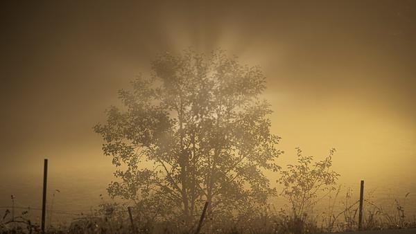 Romancing the Fog