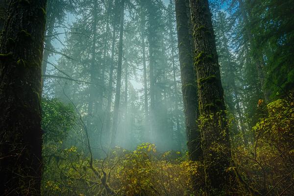 Misty Oregon Fall