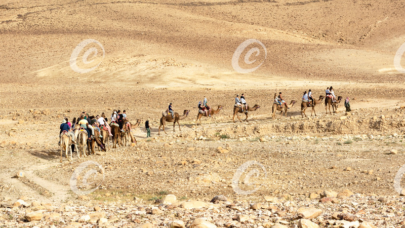 Tourists Heading Out on a Camel Tour of the Judaean Desert