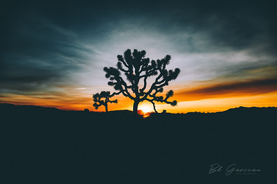 Joshua Tree Sunset (Stylized)