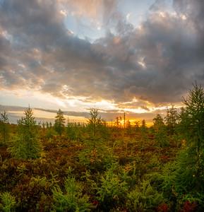 Fall Sunrise over Mer Bleue Bog
