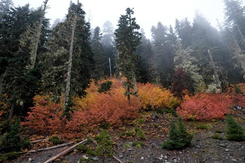 Mt. Hood National Forrest