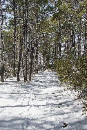 Snow Covered Path - Assateague