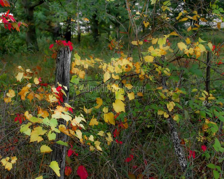 Autumn Fence