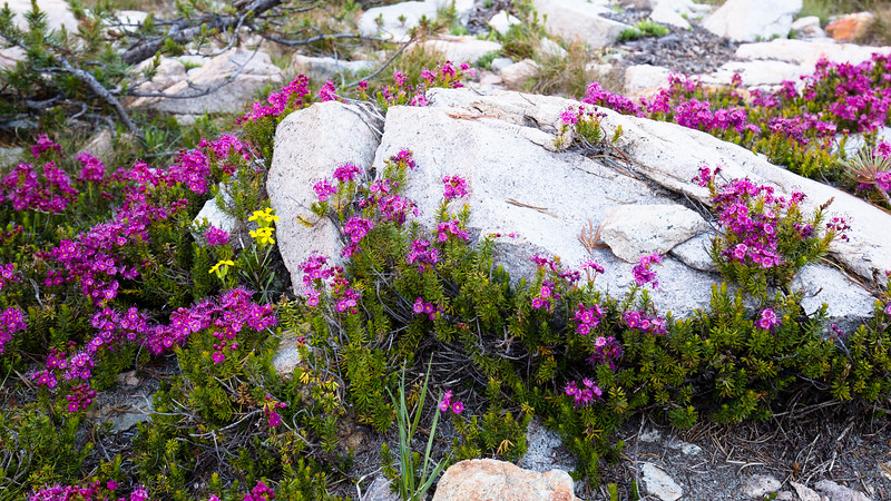 Flowers of Kings Canyon (September 2019)