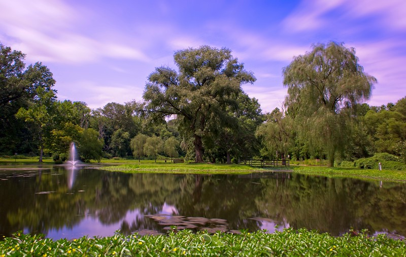 The Weeping Willows