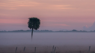 Cabbage Palm Sunrise