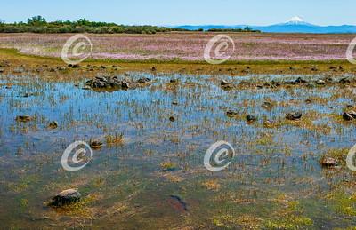 Seasonal Vernal Pool on a Plateau