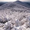 Winter Trees - Mt Ellen