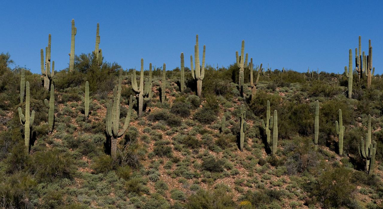Cactus Phoenix AZ