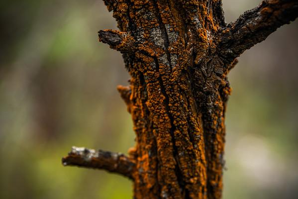 Mount Fox, Grampians National Park, Victoria, Australia