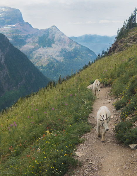 Glacier National Park Locals