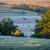 In Fields of Frost