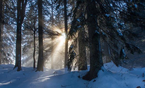 auf dem Weg zum Herzogstand ....auf einmal blitzte die Sonne durch den Nebel
