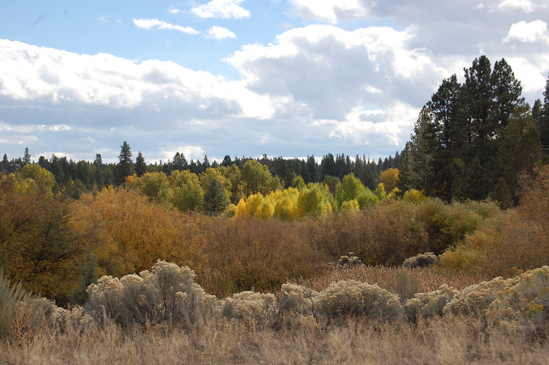 Central Oregon Landscape