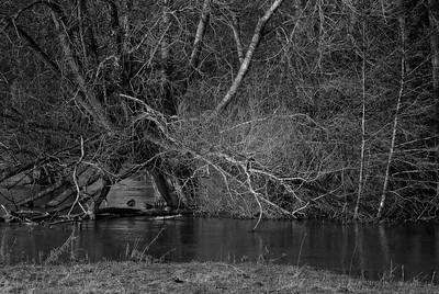 OK for Ducks - Northcroft Flood January 14 2014