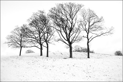 Five Trees. Primrose Hill.